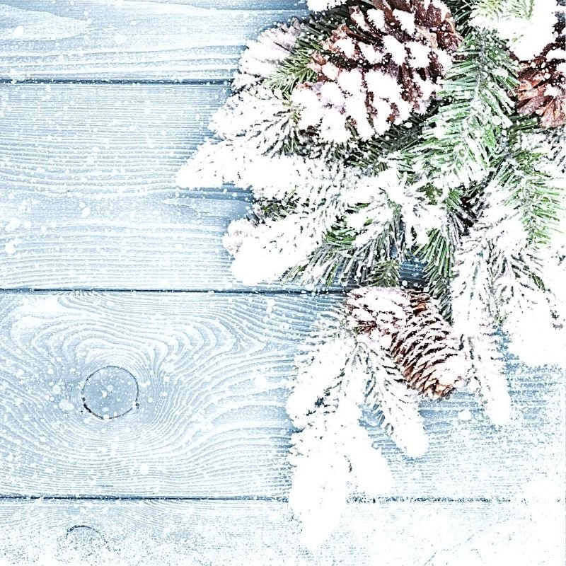 Pine cones and snow frosted pine on wood surface