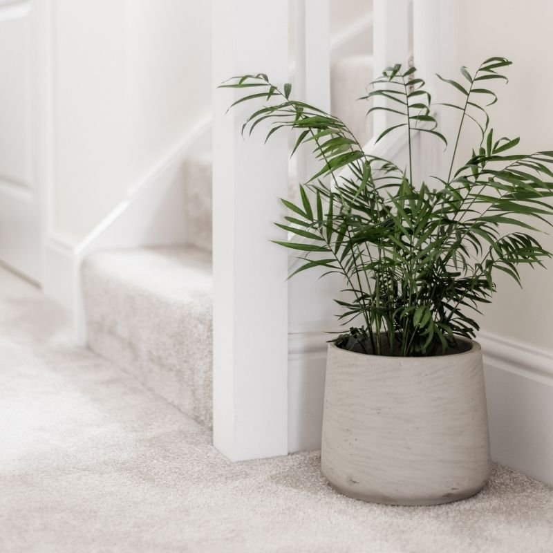 Staircase with beige carpet and white ballustrade - with green fern next to it