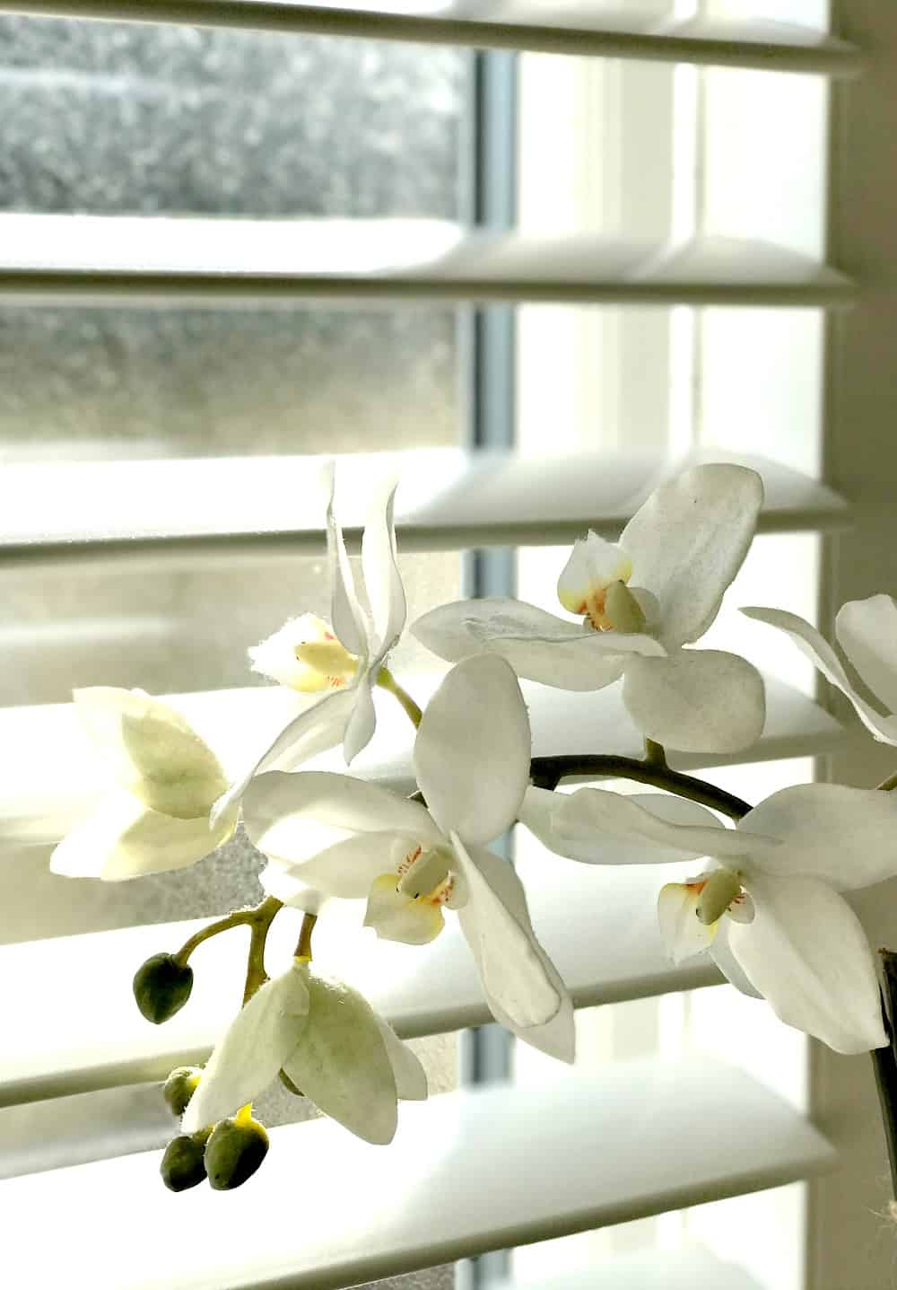 Fake orchid - artificial orchid plant