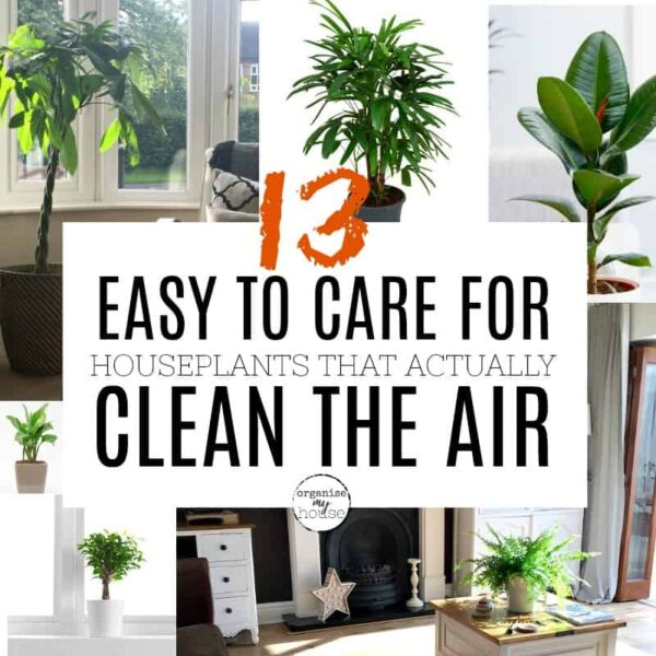 13 REALLY EASY TO CARE FOR HOUSE PLANTS THAT ACTUALLY CLEAN THE AIR!