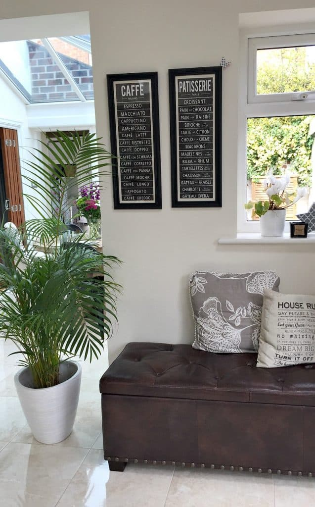 Areca Palm in a Kitchen