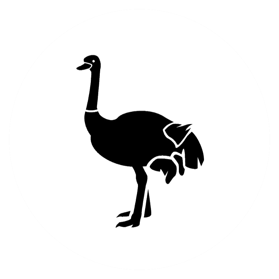 Black and White Ostrich Picture
