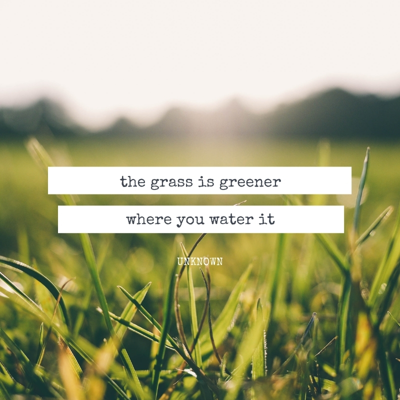 Quote - The grass is greener where you water it